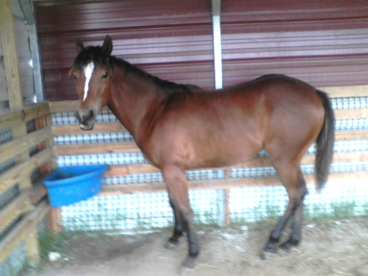 Micky, ( now a yearling )